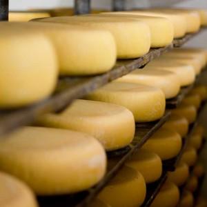 <b>Sønderhaven gårdmejeri og deres oste</b>