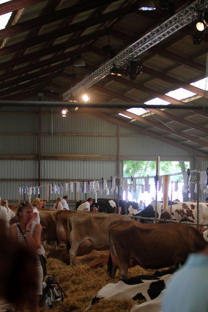 Kostald på Roskilde dyrskue 2011