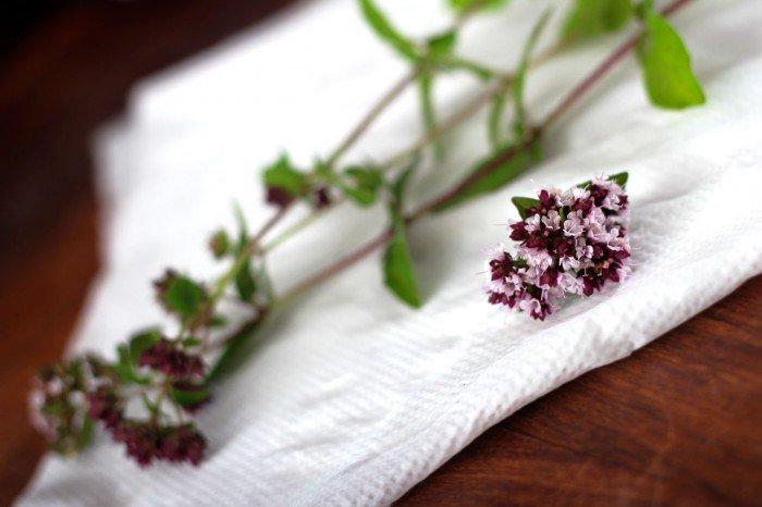 Oregano fra haven med blomster fra samme