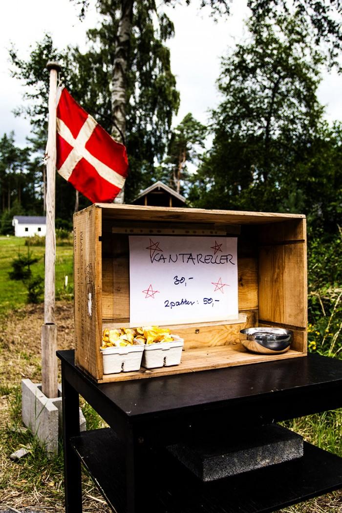Kantareller fra vejbod på Læsø