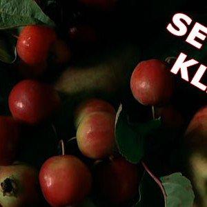 <b>MAD 2012: Tolstrup æbler og den mest fantastiske æblemost</b>