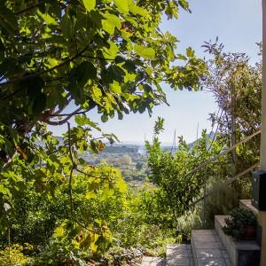 <b>Hvordan man laver olivenolie på Sicilien</b>